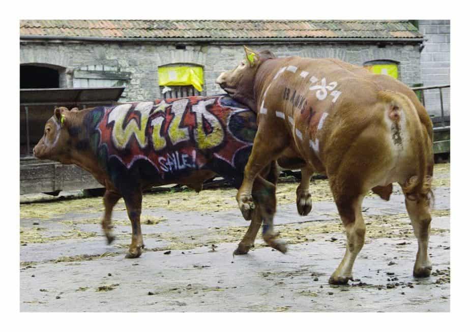 シティーブ・ラザリディスによるバンクシーの写真集「Banksy Captured  by STEVE LAZARIDES」stencils fuck old school