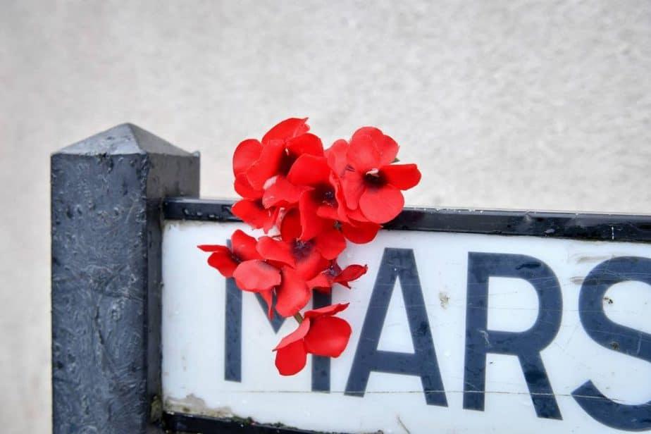 バンクシーの赤い花