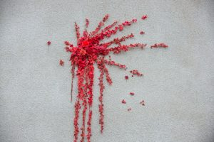 バレンタインデーに英ブリストルで見つかったバンクシーのバラの花