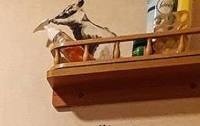 【バンクシーのネズミ】ロックダウン中のバンクシーが自宅のトイレでネズミを発表【奥さんが嫌う】上から除菌ジェルをかけるネズミ