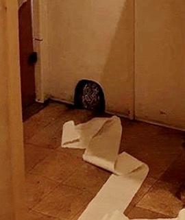 【バンクシーのネズミ】ロックダウン中のバンクシーが自宅のトイレでネズミを発表【奥さんが嫌う】巣の中のネズミ