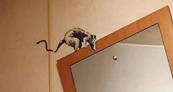 【バンクシーのネズミ】ロックダウン中のバンクシーが自宅のトイレでネズミを発表【奥さんが嫌う】鏡の上のネズミ
